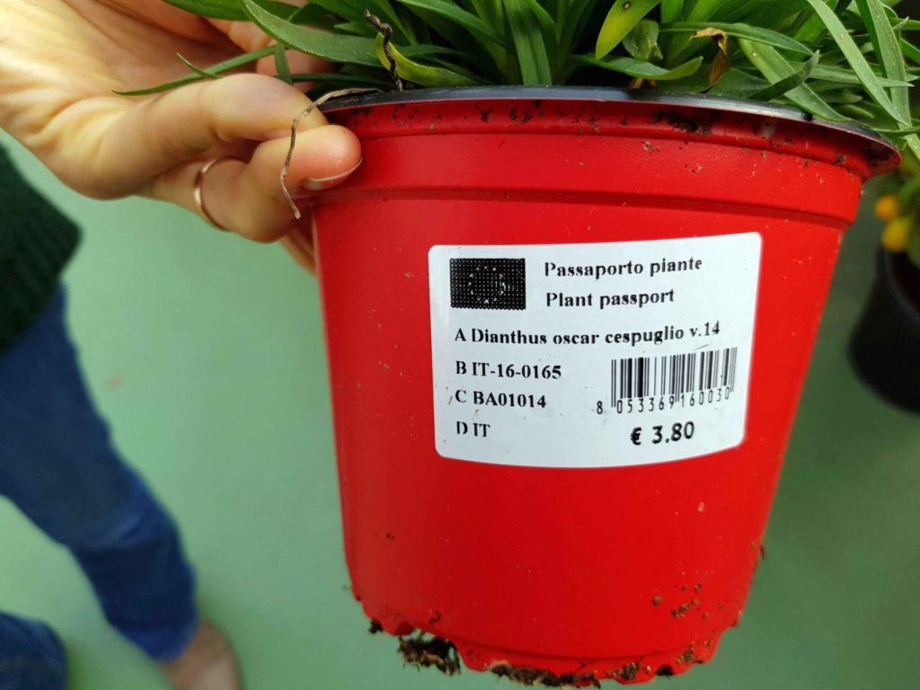 come marcare ed etichettare vasi e piante