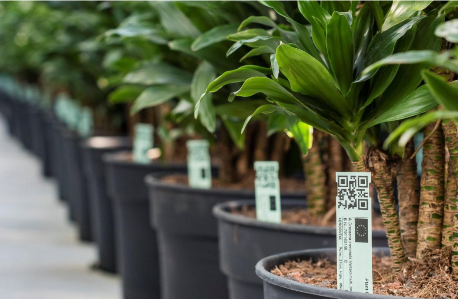 piante identificazione e tracciabilità